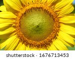 Beautiful Flower  Sunflower...