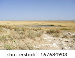 saltmarsh in west china  | Shutterstock . vector #167684903