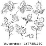 hand drawn set of rose leaves... | Shutterstock .eps vector #1677351190