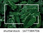 Tropical leaf pattern nature...