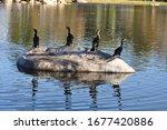 Four Cormorants Sitting On A...