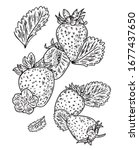 Strawberry Vector Illustration. ...