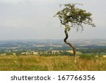 Isolated Tree Twisted By Wind