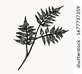 greenery fern plant... | Shutterstock .eps vector #1677737359