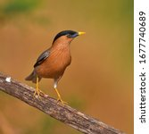 beautiful bird  brahminy... | Shutterstock . vector #1677740689