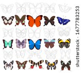 outline butterfly  coloring... | Shutterstock .eps vector #1677783253