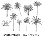hand drawn tropical palm trees. ... | Shutterstock .eps vector #1677799219