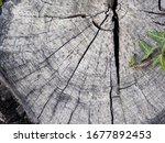 cut tree trunk. trunk life... | Shutterstock . vector #1677892453