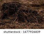 Horse Manure In Filed At Spring