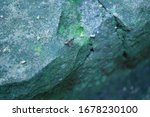 Small photo of A huge ant on a missy rock.