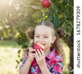 Child Picking Apples On Farm I...