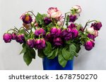 Dry Multi Colored Roses In A...