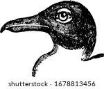 Black Headed Gull Is Inhabiting ...