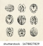 hand drawn set  vintage... | Shutterstock .eps vector #1678827829