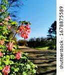 Spring In The Park. Avenham An...