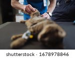 cat gets a check in a... | Shutterstock . vector #1678978846