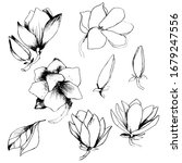 Set With A Pencil Of Magnolia....