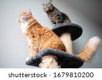 Two Cats On A Cat Tree Looking...