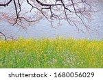 the natural roadside blossom... | Shutterstock . vector #1680056029