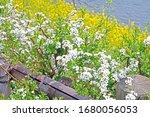 the natural roadside blossom... | Shutterstock . vector #1680056053