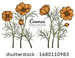 orange cosmos flower and leaf... | Shutterstock .eps vector #1680110983