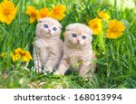 Stock photo cute little kittens sitting in flower meadow 168013994