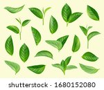 green leaves set. plants... | Shutterstock .eps vector #1680152080
