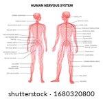 human male female body central... | Shutterstock .eps vector #1680320800