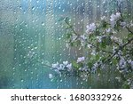 Spring Rain In The Forest ...