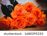 Beautiful rose petals. orange...