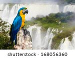 Blue And Yellow Macaw In Iguaz...