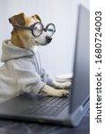 Smart Dog Using Computer. Funny ...