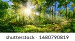 Scenic Forest Of Deciduous...