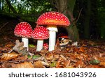Fly Agaric In The Autumn Forest