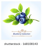 blueberry branch  leaves and... | Shutterstock .eps vector #168108143