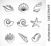 Vector Collection Of Sea Shells ...