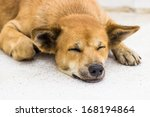 Постер, плакат: Dog sleep on the