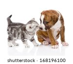 Stock photo kitten sniffing puppy isolated on white background 168196100