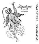 set aquilegia. sketch flower...   Shutterstock .eps vector #1681975903