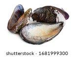 Bivalve Mollusk Shells Of...