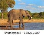 elephant drinking at makololo... | Shutterstock . vector #168212600