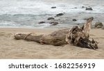 Driftwood Log On Sand At The...