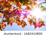 Leaves In Autumn   Closeup  ...