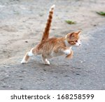 Stock photo red little kitten hunt by the mosquito on road on sunny day on summer 168258599