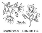 magnolia flower and leaf... | Shutterstock .eps vector #1682681113