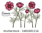 red cosmos flower and leaf... | Shutterstock .eps vector #1682681116