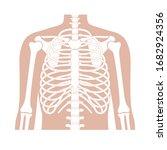 human rib cage anatomy flat... | Shutterstock .eps vector #1682924356