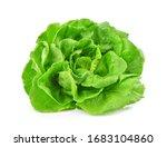 Green Butterhead Lettuce...
