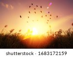 Birds Flying And Grass Flower...