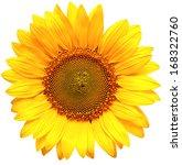 Sunflower Isolated On White...